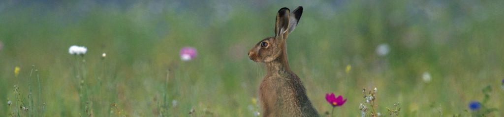 hare-preservation-trust-